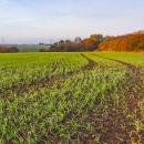 Autumn landscape with field of winter barley