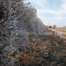 hedgerow in winter with frost