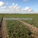 wheat crop in spring around or just pre the T0 timing