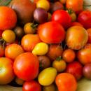 Ripe tomatoes, multi colours different varieties