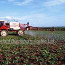 Self propelled bateman sprayer in sugar beet