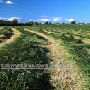 Grass swathed against a blue summer sky